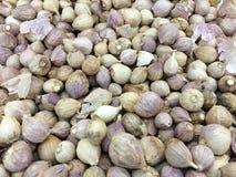 Elephant garlic Stock Image