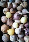 Elephant garlic stock photography