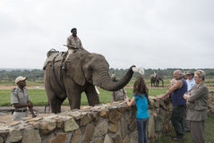Elephant getting hat from girls head Stock Images