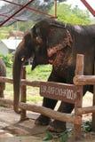 Elephant. Stock Photography