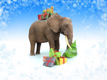 Elephant with gift boxes. Stock Photo