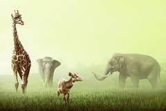 Elephant, Giraffe, and Deer on the grassland Royalty Free Stock Image