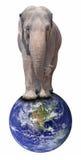 Elephant on Globe Royalty Free Stock Images
