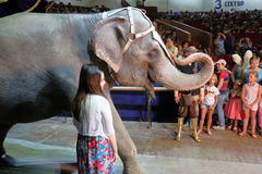 Elephant goes to the circus Royalty Free Stock Image
