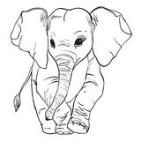 Elephant goes. Vector illustration of an African elephant, which is moving forward on a white background Stock Photos