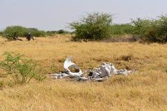 An elephant graveyard Stock Image