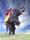 Elephant in green field and sun sky Stock Photography