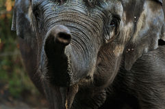 Elephant Greenting Stock Photography
