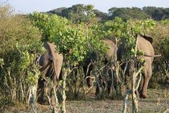 Elephant group Stock Photo