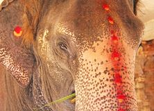 Elephant in Hampi, elephant close-up, portrait of an elephant.  stock photography
