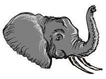 Elephant. Hand drawn, sketch, cartoon illustration of head of elephant Stock Photos