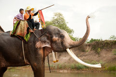 Elephant hapiness with water after Ordination parade on elephant Stock Photos