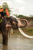 Elephant happiness with water after Ordination parade on elephant Royalty Free Stock Photo