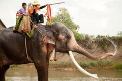 Elephant happiness with water after Ordination parade on elephant Stock Photography