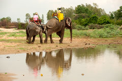 Elephant happiness with water after Ordination parade on elephant Royalty Free Stock Photography