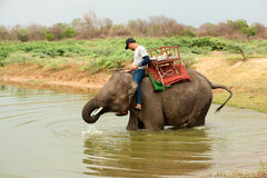 Elephant happiness with water after Ordination parade on elephant Stock Image