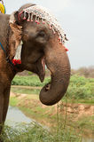 Elephant happiness with water after Ordination parade on elephant Royalty Free Stock Photos