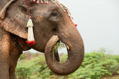 Elephant happiness with water after Ordination parade on elephant. Stock Photography