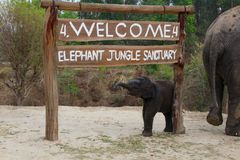 Elephant Jungle Sanctuary Thailand Chang Mai stock photos