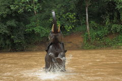 An elephant is having a bath Royalty Free Stock Photos