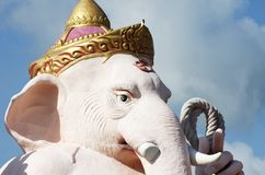 The elephant head Royalty Free Stock Images