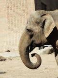 Elephant head Stock Image