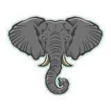 Elephant Head Royalty Free Stock Photography