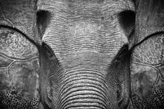 Elephant Head in Black and White. The Elephant Head in Black and White Royalty Free Stock Image
