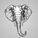 Elephant head black and white engraving style. A beautiful Indian animal in the sketch style. Vector illustration. Similar image. EPS 10 Royalty Free Stock Photography