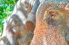 Elephant head close-up. View from the side. stock images