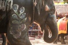 Elephant head. Stock Photo