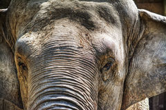 Elephant head in hdr Stock Photography