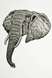 Elephant head portrait. Drawing of african elephant head Stock Photo