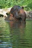 Elephant head and river. Elephant and water in tropical forest Royalty Free Stock Photo