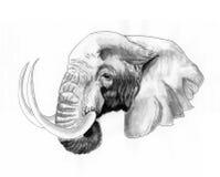 Elephant  head. Sketch on paper Stock Photos