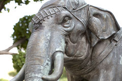 Elephant head. Elephant standing in front of the buddhist temple Stock Photography