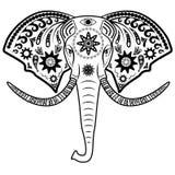 Elephant head Royalty Free Stock Image
