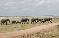 Elephant Heard stock photo