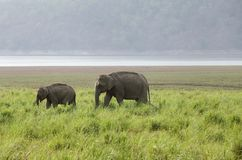 A elephant with her calf Royalty Free Stock Photos