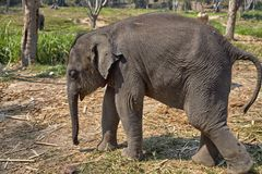 Elephant and her child Royalty Free Stock Photos