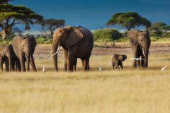 Elephant herd in Amboseli. Elephant herd with baby in the beautiful landscape of Amboseli National Park in Kenya stock image