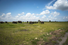 Elephant herd at watering Royalty Free Stock Photos