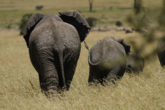 Elephant Highway Stock Image