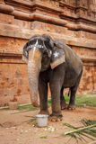 Elephant in Hindu temple Royalty Free Stock Images