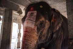 Elephant in a Hindu Virupaksha Temple. The sacred elephant in a Hindu Virupaksha Temple. Hampi, Karnataka, India stock image