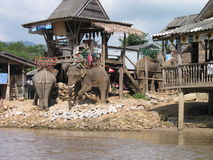 Elephant for Hire. Karen Tribe Elephant ride station Stock Photos