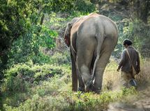 Elephant and his keeper head off home. Trekking in northern Thailand. After another days work carrying tourists around the area,, the elephant and his keeper stock photos
