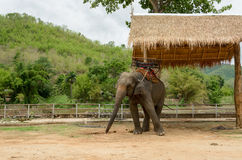 Elephant with howdah at elephants camp,Thailand Royalty Free Stock Images