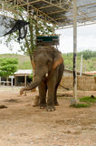 Elephant with howdah at elephants camp,Thailand Stock Image