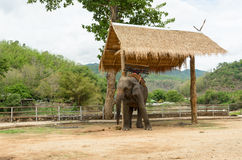 Elephant with howdah at elephants camp,Thailand Royalty Free Stock Photo
